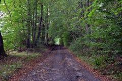 El camino a través del bosque fotografía de archivo libre de regalías