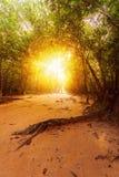 El camino a través del bosque en la selva con luz del sol hermosa Fotografía de archivo