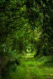 El camino verde Imágenes de archivo libres de regalías