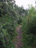 El camino verde en la ciudad Fotos de archivo