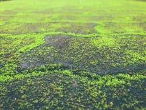 El camino viejo cubrió el musgo verde Foto de archivo libre de regalías