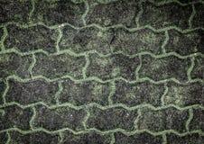 El camino viejo cubrió el musgo verde Fotos de archivo libres de regalías