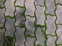 El camino viejo cubrió el musgo verde Imagen de archivo libre de regalías