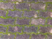 El camino viejo cubrió el musgo verde Fotografía de archivo libre de regalías