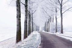 El camino y los árboles en el campo se cubren con nieve fotos de archivo libres de regalías