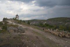 El campanario del monasterio de la cueva y una manada de las ovejas Foto de archivo libre de regalías