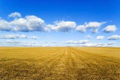 El campo. Fotografía de archivo libre de regalías