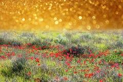 El campo abstracto soñador de la amapola con brillo enciende el fondo imagen de archivo