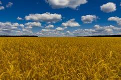 El campo amarillo es un cielo azul, similar a la bandera de Ucrania foto de archivo