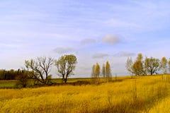 El campo amarillo y el cielo azul Foto de archivo