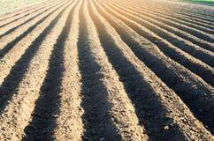 El campo arado después del cultivo se preparó para plantar cosechas agrícolas Paisaje con la región agrícola agricultura, verdura foto de archivo libre de regalías