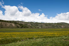 El campo coloca Wyoming imágenes de archivo libres de regalías