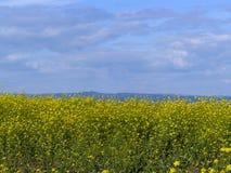 El campo con las pequeñas flores amarillas contra las montañas imagen de archivo libre de regalías