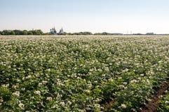 El campo con una patata tira el primer Fotografía de archivo libre de regalías