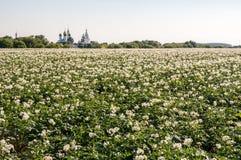 El campo con una patata tira el primer Imagen de archivo