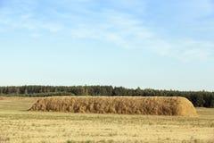 El campo cosechó la cosecha del trigo Fotos de archivo libres de regalías
