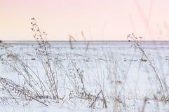 El campo cubierto con nieve, invierno severo condiciona Fotografía de archivo