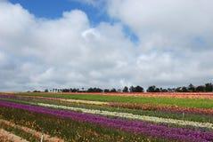 El campo de flor Imagenes de archivo