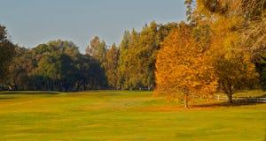 El campo de golf pone verde dos árboles de la hoja de oro Imágenes de archivo libres de regalías