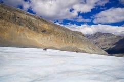 El campo de hielo de Columbia en las montañas rocosas canadienses, y la vista del glaciar Fotos de archivo libres de regalías