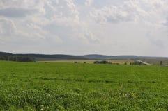 El campo de la hierba verde estira en la distancia imagen de archivo libre de regalías