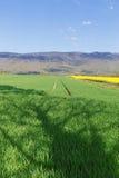 El campo de la violación amarilla florece en un fondo de las montañas el Jura en Francia en la primavera Fotos de archivo libres de regalías