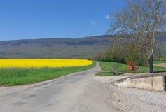 El campo de la violación amarilla florece en un fondo de las montañas el Jura en Francia en la primavera Fotografía de archivo libre de regalías