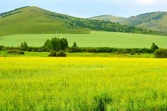 El campo de la violación de semilla oleaginosa en el prado Imágenes de archivo libres de regalías