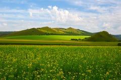 El campo de las colinas y de flores de la violación Imagenes de archivo