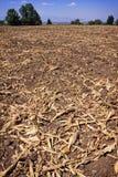 El campo de maíz descascara a la izquierda después de cosecha Imagenes de archivo
