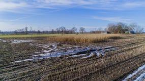 El campo de maíz es afectado por la sequedad de la sequía en invierno imagen de archivo libre de regalías