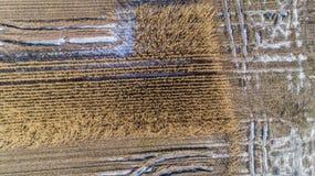El campo de maíz es afectado por la sequedad de la sequía en invierno imagenes de archivo