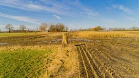 El campo de maíz es afectado por la sequedad de la sequía en invierno imágenes de archivo libres de regalías