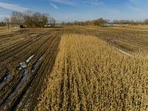 El campo de maíz es afectado por la sequedad de la sequía en invierno fotos de archivo libres de regalías