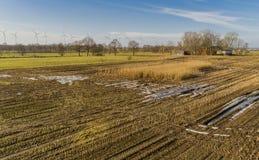 El campo de maíz es afectado por la sequedad de la sequía en invierno fotografía de archivo