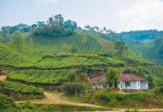 El campo de Munnar, Kerala, la India Foto de archivo libre de regalías