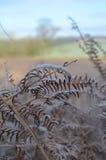 El campo de Sussex en invierno Imagenes de archivo
