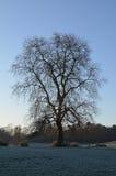 El campo de Sussex en invierno Fotografía de archivo