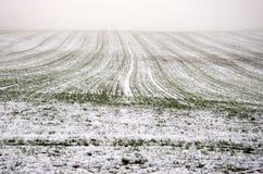 El campo de trigo de la cosecha del invierno cubrió nieve y la niebla oscura de la mañana Imagen de archivo libre de regalías