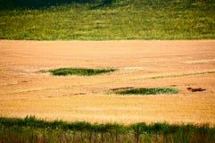 El campo de trigo de oro en el prado Fotografía de archivo