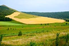 El campo de trigo de oro en la colina Imágenes de archivo libres de regalías