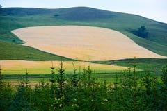 El campo de trigo de oro en la ladera Fotografía de archivo libre de regalías