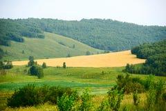 El campo de trigo en el bosque Imagenes de archivo