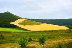 El campo de trigo en la ladera Imagen de archivo libre de regalías