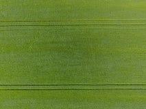 El campo de trigo es verde Trigo joven en el campo Visión desde arriba Fondo de textura del trigo verde Hierba verde Fotos de archivo