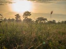 El campo del arroz de la mañana Foto de archivo