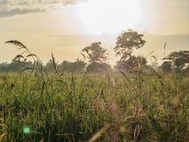 El campo del arroz de la mañana Imagen de archivo libre de regalías