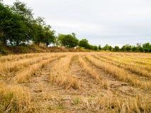 El campo después de la cosecha Foto de archivo libre de regalías