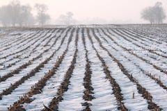 El campo es cubierto por la nieve Fotos de archivo
