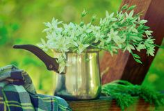 El campo florece el ramo Imagenes de archivo